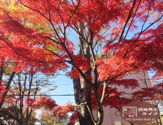 aki-20141125-1