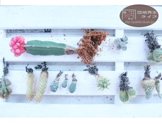 サボテン 寄せ植え DIY