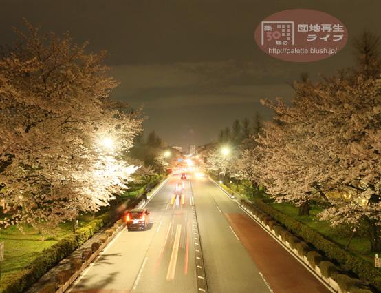 国立 夜桜