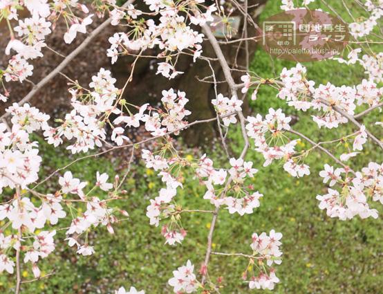 blog-photo-20160404-12